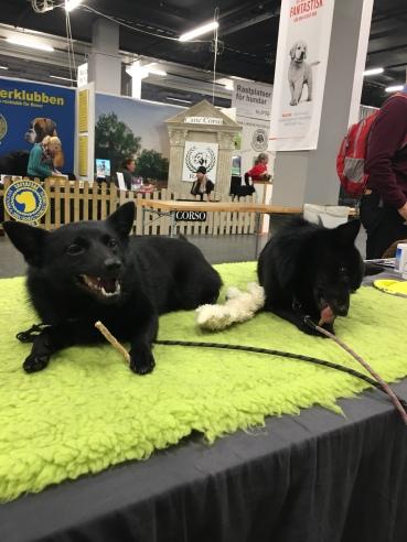 NoTäterbenmydog2018